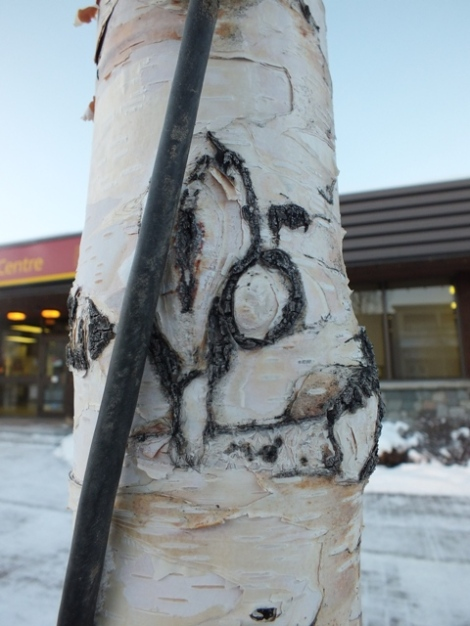 I See Half a Boreal Owl Face Growing Out of the Tree Trunk!