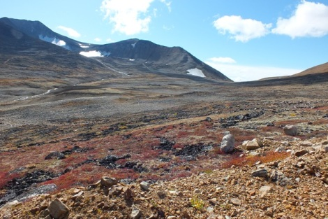 White-tailed Ptarmigan Habitat