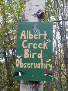 Albert Creek Bird Observatory (5)