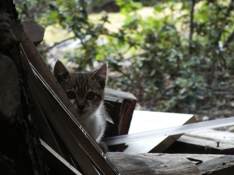 One of the Feral Kittens