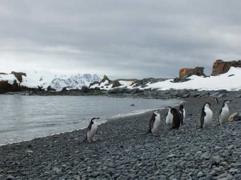 Halfmoon Island and Chinstrap Penguins