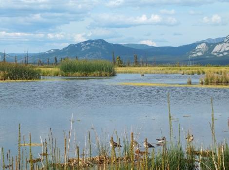 Swan Lake's Rarity Ponds