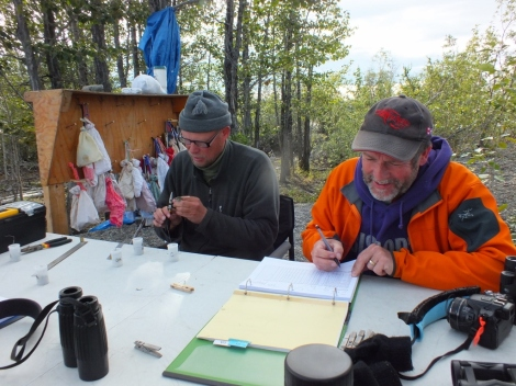 Jukka (left) banding Pine Siskens, and Ted (right) on scribe duty.